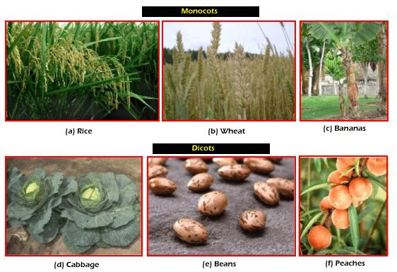 Angiosperm Plants