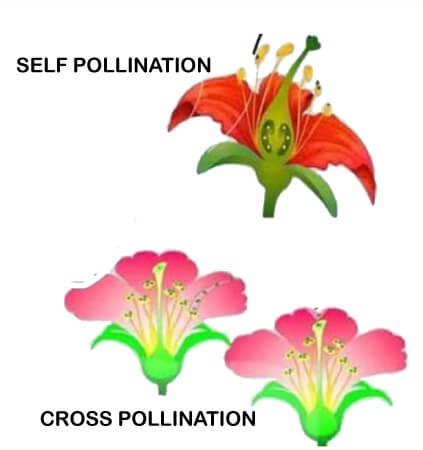 Pangiosperms Plants