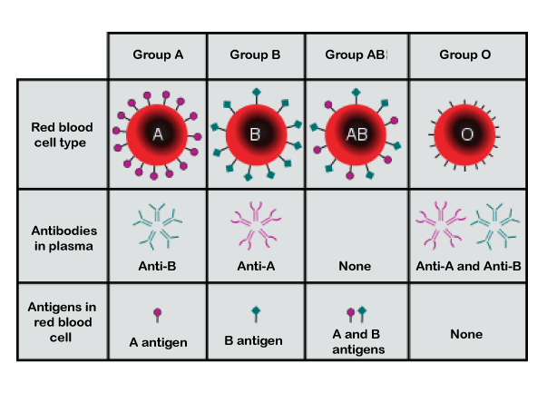 Blood Group Types