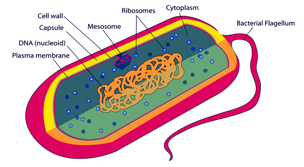 Types of Cell