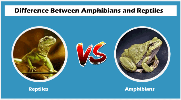 Difference between Amphibians and Reptiles