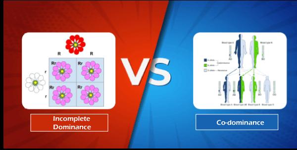 Incomplete Dominance vs Co-dominance