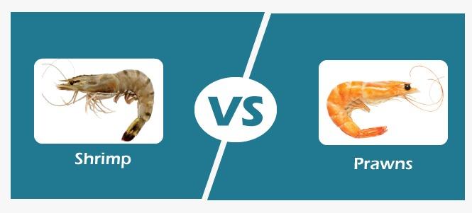 Shrimp vs Prawn