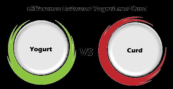 Yogurt vs Curd