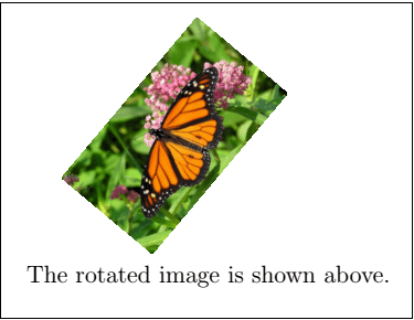 Latex Images